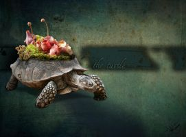 the turtle by kosepa