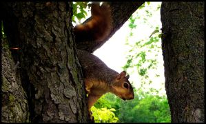 Squirrel 1 by theory6-brian