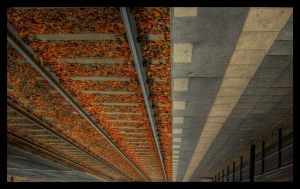 God's Ceiling - HDR by ceasetobeme