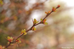Buds are bursting by ThereseBorg