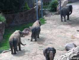 Asian Elephants by pyraLyte