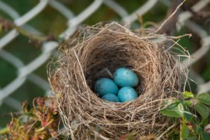Bird Nest with Eggs 02 by FairieGoodMother