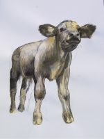 Cow 140407 by AEnigm4