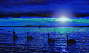 Swan Lake by montag451