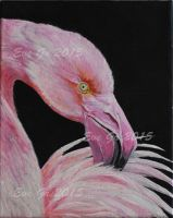 Portrait d'un flamant rose by EVEGR