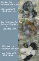 Bunny Kits by Tricksters-Taxidermy