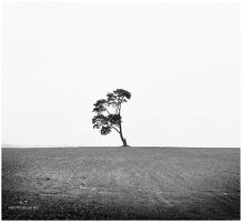 The tree 5 by orlibraorli