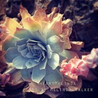 Rainbow Succulent by heartMelinda