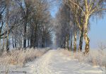 Winter landscape 9 by ThereseBorg