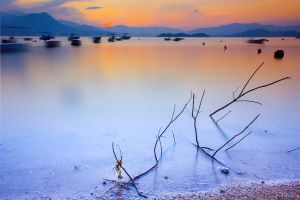 Lonely Tree With Magic Hour by johnchan
