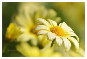 Flower Time_1 by XanaduPhotography