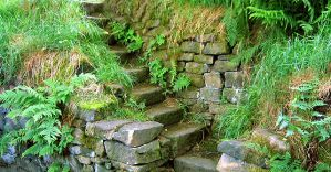 Steps by 12d3
