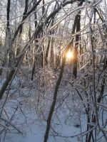 Trees in Ice by DreamAReality
