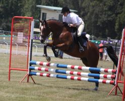 STOCK Showjumping 431 by aussiegal7