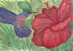 Hummingbird and hibiscus flower by Wintella