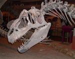 Allosaurus skull stock by Rhabwar-Troll-stock