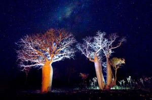 The Boab Garden at Midnight by Sun-Seeker