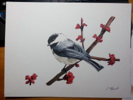 Another Chickadee by dareith
