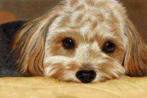 Golden Puppy - digital painting by Giselle-M