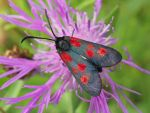 Red spots by starykocur