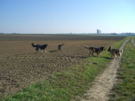 4 dogs on a field by pepelone