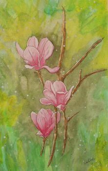 Pink Magnolias by woody2252