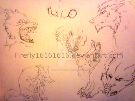 Werewolf Sketches :) by firefly16161616