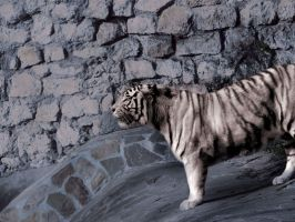 white_tiger by InnocentRage