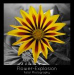 Flower-Explosion by TEOxan