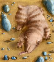Spade Nosed Mole by capefoxalix