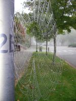 Spider Web Stock 2 by chamberstock