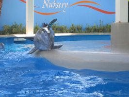 Posing Dolphin by AudeS