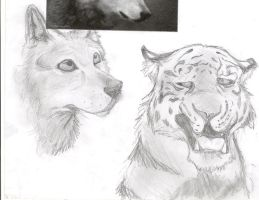 Wolf and tiger sketches by DawnFrost