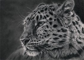 Leopard by Bengtern