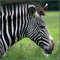 Barcode Horse by CoupeKid