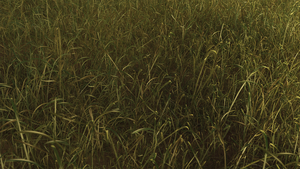 Realistic Grassfield by paintevil