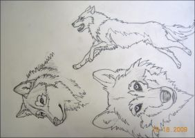 Wolf sketches by Jezarae