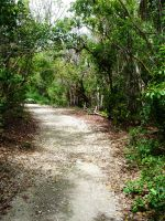 The Road : Crane Point Trail by Estel