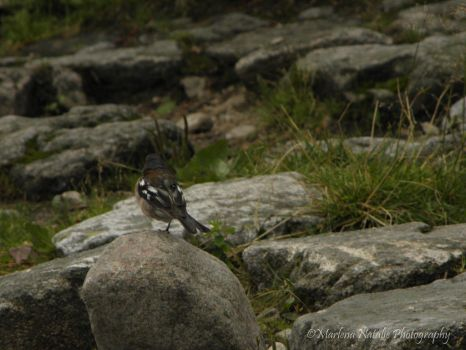 Bird in the mountains by mel90212