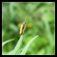 Insect by bicyclegasoline