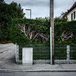 Suburban Hedge Monsters by vamosver