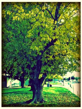 Yellowish greenish leaves by Spoil-the-Tee-Tree