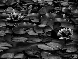 nature in mono by archonGX