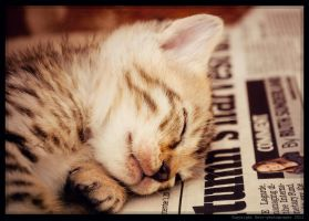 Nap Time II by Sato-photography