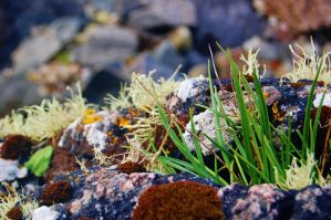 Moss Rocks and Grass by nazzara