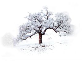 Snow bound oak by kayaksailor