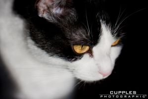 Watching by cupplesey