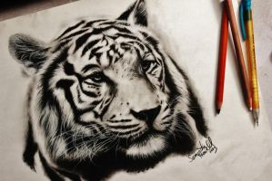 White Tiger Portrait by sjhowell11