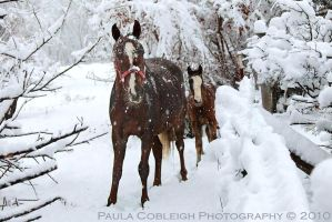 Snow Horses by La-Vita-a-Bella