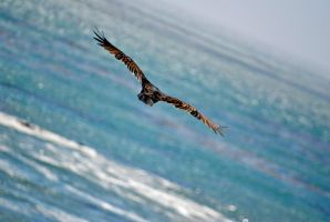 Come Fly With Me... by dantordjman